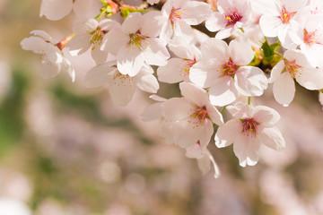 新生活が始まる春は引越し費用が高くなる